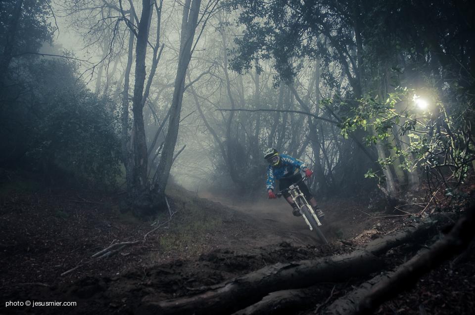 Magic Forest Luis Matias