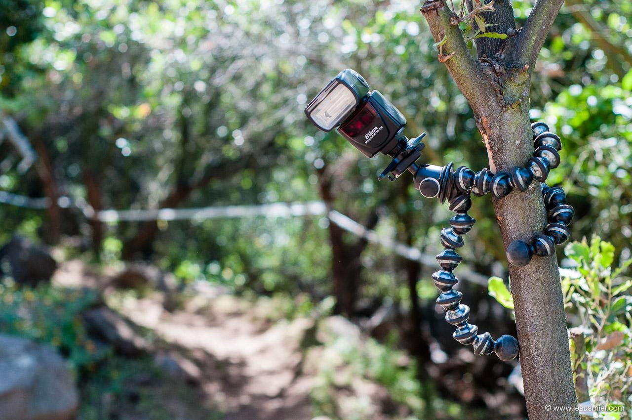 GorillaPod Focus sujetado a rama vertical