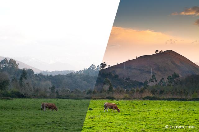 editando vacas pastando (Antes y después)